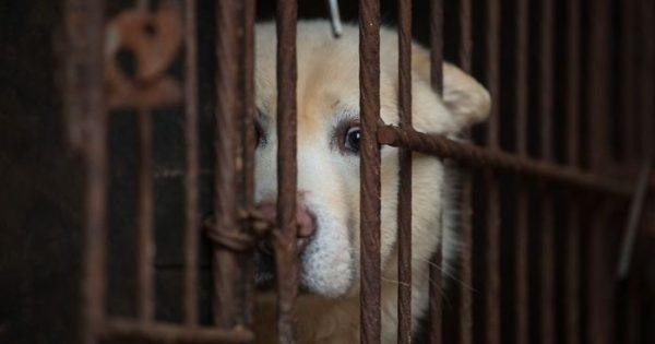 Η Ταϊβάν έγινε η πρώτη ασιατική χώρα που απαγόρεψε την κατανάλωση του κρέατος γατών και σκύλων