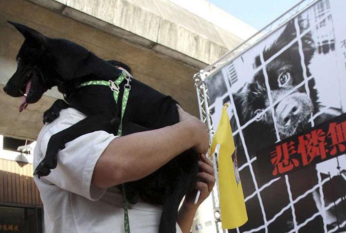 Ταϊβάν κακοποίηση σκύλων κακοποίηση ζώων κακοποίηση γάτας