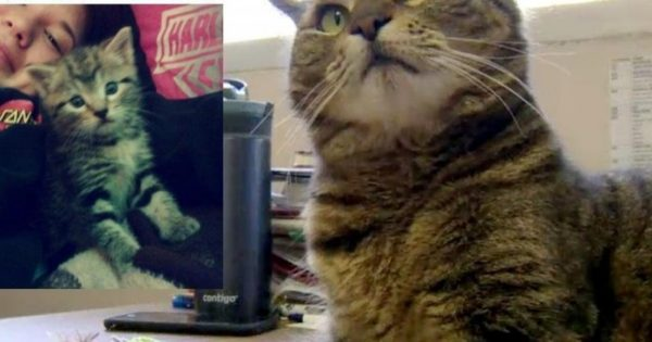 Γάτα που χάθηκε στην Καλιφόρνια πριν από 4 χρόνια εμφανίζεται στο Οντάριο του Καναδά!
