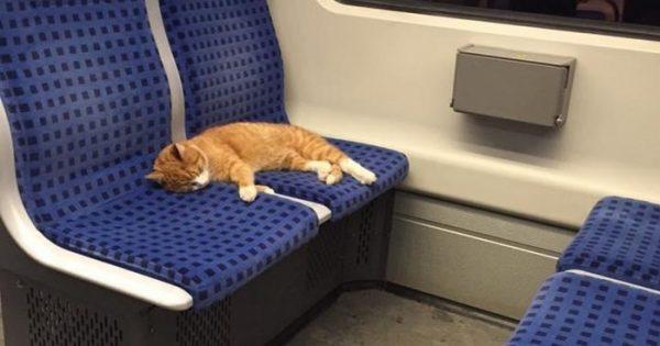 Γατούλα μπαίνει σε βαγόνι του μετρό στην Γερμανία για να ρίξει έναν υπνάκο