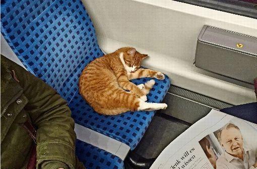 τρένι Γάτα βαγόνι