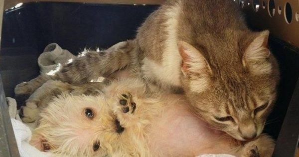 Γάτα επιβιώνει από επίθεση σκύλων και υιοθετεί ένα ορφανό κουτάβι