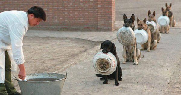 Aστυνομικοί σκύλοι που περιμένουν στην ουρά μας βάζουν τα γυαλιά για το τι θα πει υπομονή