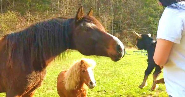 Δύο άλογα βλέπουν για πρώτη φορά ένα μικρό κατσικάκι. Η αντίδρασή τους κάνει τον γύρο του διαδικτύου!