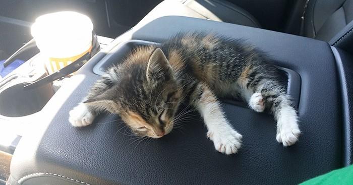 Οδηγός φορτηγού βρίσκει αδέσποτο γατάκι στη μέση του δρόμου και αυτό αποκοιμήθηκε με το που το διέσωσε γάτος γάτες γατάκι Γάτα αδέσποτο γατάκι