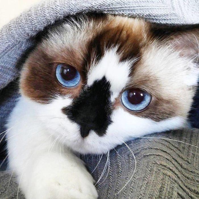 την γατούλα με την ιδιαίτερη μύτη και τους 500.000 followers Γνωρίστε τον Albert γατούλα με ιδιαίτερη μύτη