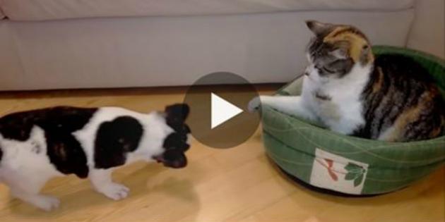 Ο σκύλος νύσταζε αλλά το κρεβάτι του ήταν κατειλημμένο. Όταν πήγε να ξαπλώσει; Προσέξτε την αντίδραση της γάτας! γάτες Γάτα