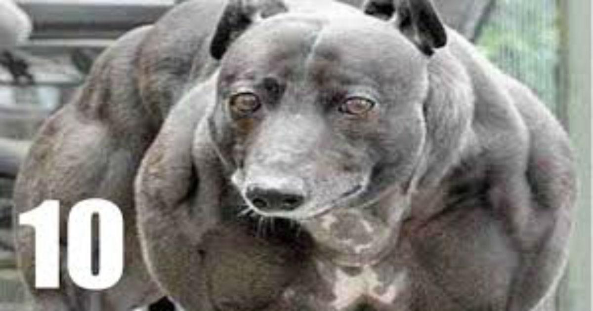 τα πιο δυνατά σκυλιά του κόσμου Σκύλος σκύλοι δυνατός σκύλος δυνατά σκυλια Αυτά είναι τα 10 πιο δυνατά σκυλιά του κόσμου (video)
