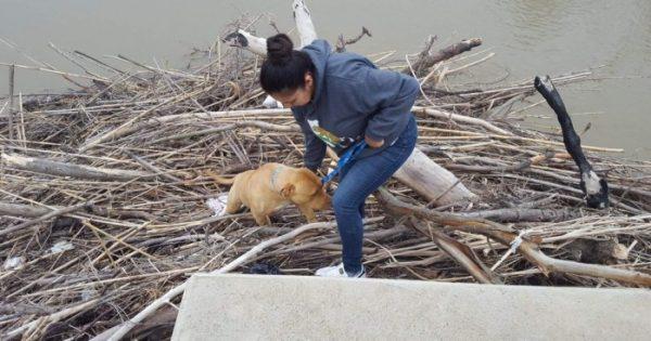 Χαμένο σκυλί είχε κολλήσει για μέρες σε μια στοίβα από κλαδιά στη μέση ενός ποταμού