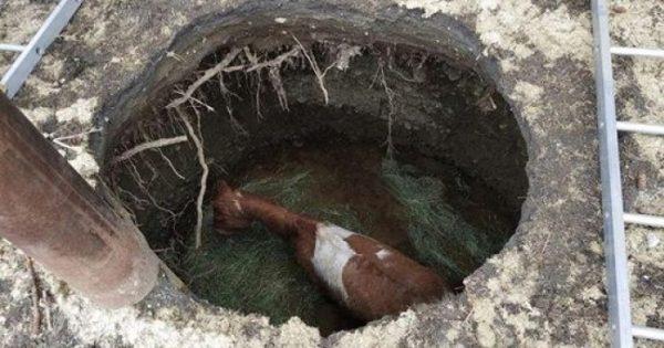 Άλογο που έπεσε σε τρύπα στο έδαφος δεν μπορεί να κρύψει την χαρά του όταν διασώθηκε