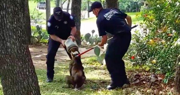 Σκύλος είχε κολλήμενο ένα βάζο στο κεφάλι του για 3 μέρες!