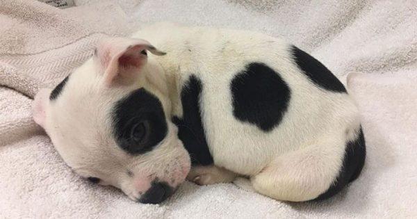 Σκύλος που αφέθηκε να πεθάνει επειδή είναι διαφορετικός υιοθετείται από ένα ζευγάρι που τον αγαπάει όπως είναι