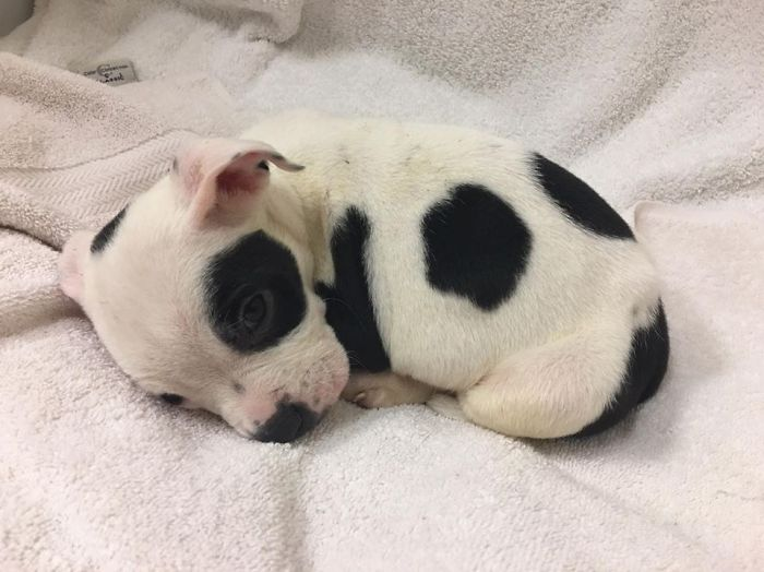 Σκύλος που αφέθηκε να πεθάνει επειδή είναι διαφορετικός υιοθετείται από ένα ζευγάρι που τον αγαπάει όπως είναι Σκύλος σκύλοι