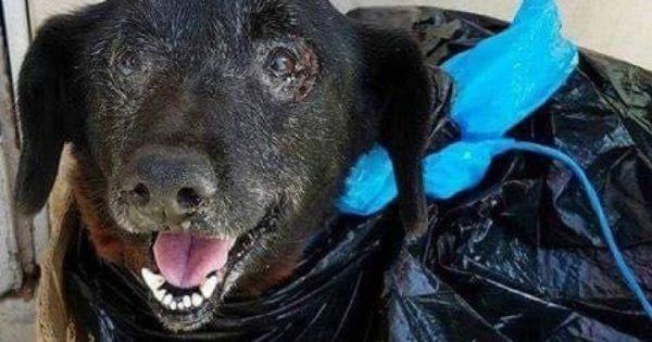 Σκυλάκι τυλιγμένο σε μια πλαστική τσάντα εγκαταλείφθηκε σε καταφύγιο ζώων