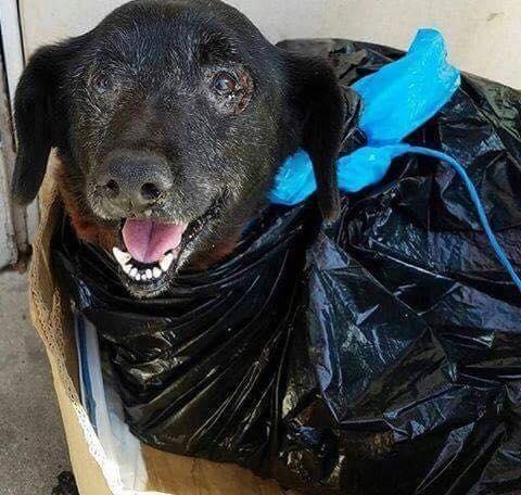 Σκύλος σκύλοι Σκυλάκι τυλιγμένο σε μια πλαστική τσάντα εγκαταλείφθηκε σε καταφύγιο ζώων σκυλάκι