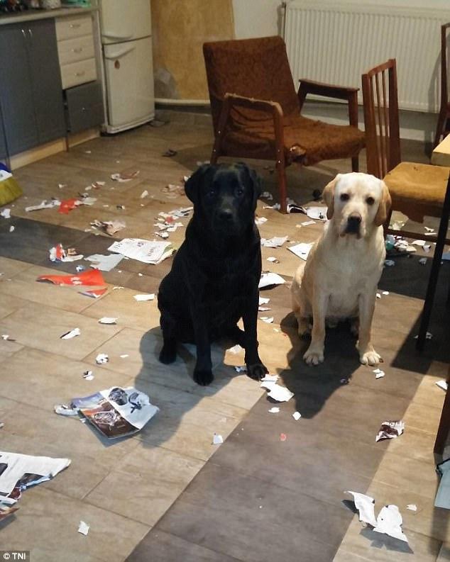άφησαν τα κατοικίδιά τους 19 απελπισμένοι ίδιοκτήτες που άφησαν τα κατοικίδιά τους μόνα στο σπίτι και όταν επέστρεψαν βρήκαν τα πάντα κατεστραμμένα!