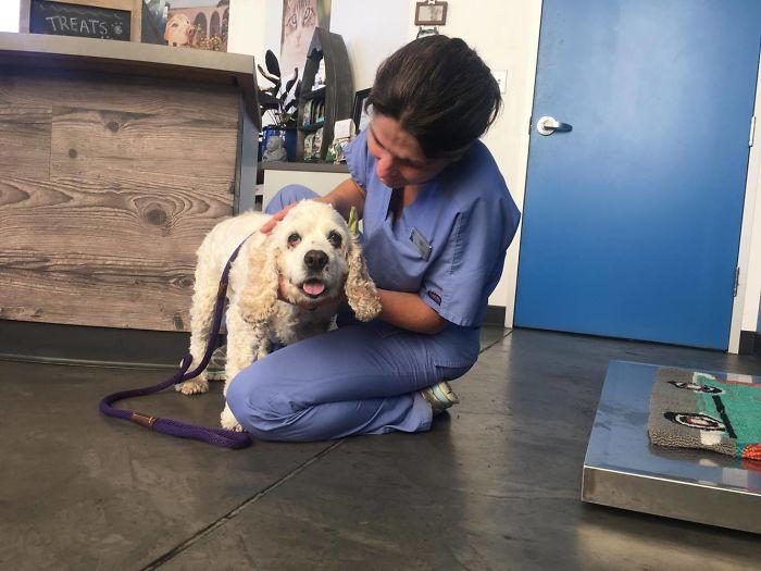 ιδιοκτήτης σκύλου τον παρατάει επειδή είναι μεγάλος Ιδιοκτήτης 20χρονου σκύλου τον παρατάει σε καταφύγιο μόνο και μόνο επειδή είναι μεγάλος σε ηλικία