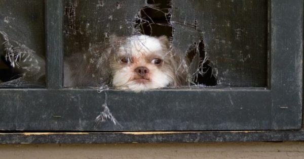 Οι επιστήμονες αποκαλύπτουν ΤΙ συμβαίνει στον σκύλο μας όταν μένει μόνος του όλη τη μέρα. Δεν είχαμε ιδέα…