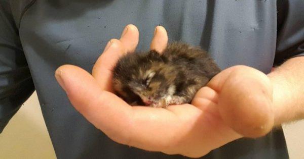 Άνδρας βρήκε μικροσκοπικό γατάκι ενώ δούλευε πάνω σε ένα αμάξι και το διέσωσε