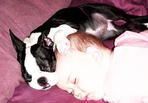 σκύλος και παιδί Σκύλος σκύλοι και παιδιά σκύλοι σκυλιά παιδιά παιδί