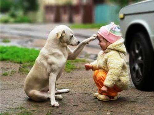 Συγκινητικές εικόνες ανθρώπων με τα σκυλιά τους!