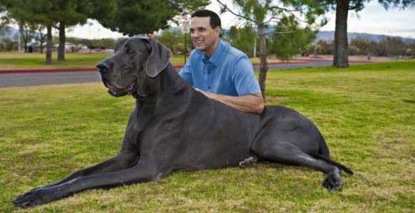 Γιατί οι μεγαλόσωμοι σκύλοι ζουν λιγότερο