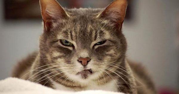 Όταν οι γάτες τρώνε απίστευτες… τούμπες!