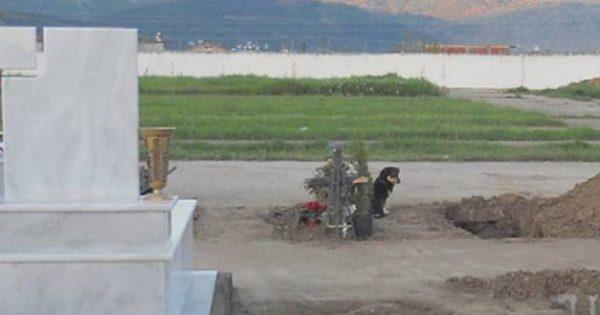 Ξάνθη – Σκύλος κοιμάται εδώ και μια βδομάδα πάνω στον τάφο του κηδεμόνα του