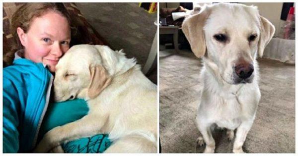 Τυφλό κουτάβι που του μένουν μόνο 5 χρόνια ζωής, βρίσκει την τέλεια μαμά