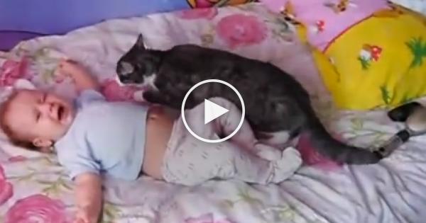 Η γάτα δεν άντεχε να ακούει το μωρό να κλαίει και πήδηξε πάνω του. ΑΥΤΟ που συνέβη στη συνέχεια; Δεν θα το πιστεύετε!