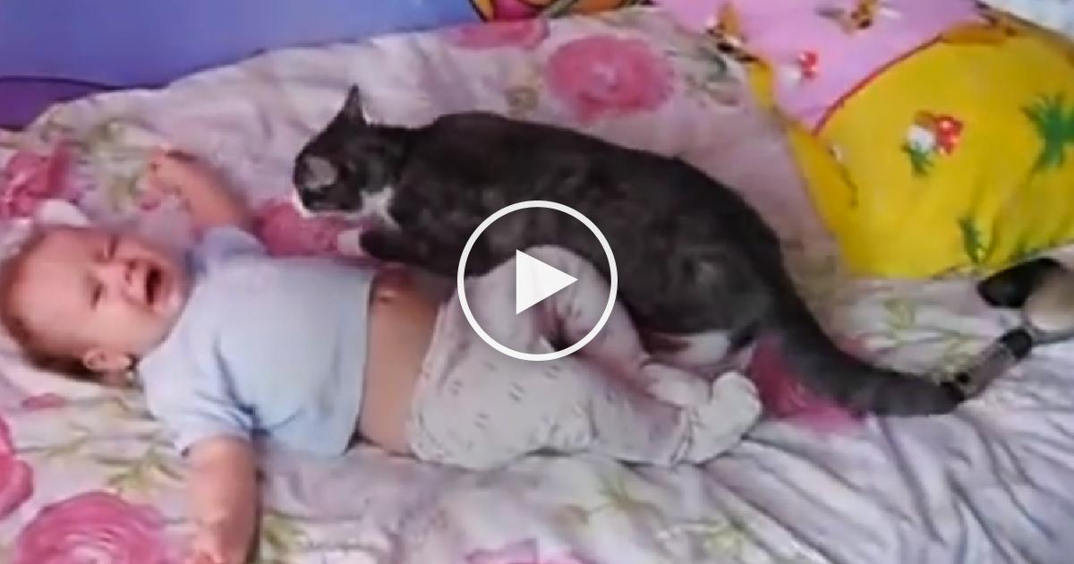 Η γάτα δεν άντεχε να ακούει το μωρό να κλαίει και πήδηξε πάνω του. ΑΥΤΟ που συνέβη στη συνέχεια; Δεν θα το πιστεύετε! γάτες Γάτα