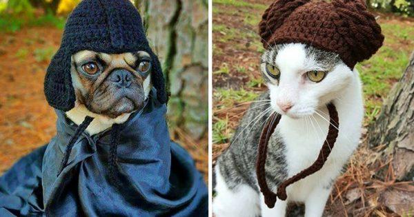 Καλλιτέχνιδα πλέκει καπέλα για κατοικίδια και είναι τέλεια!