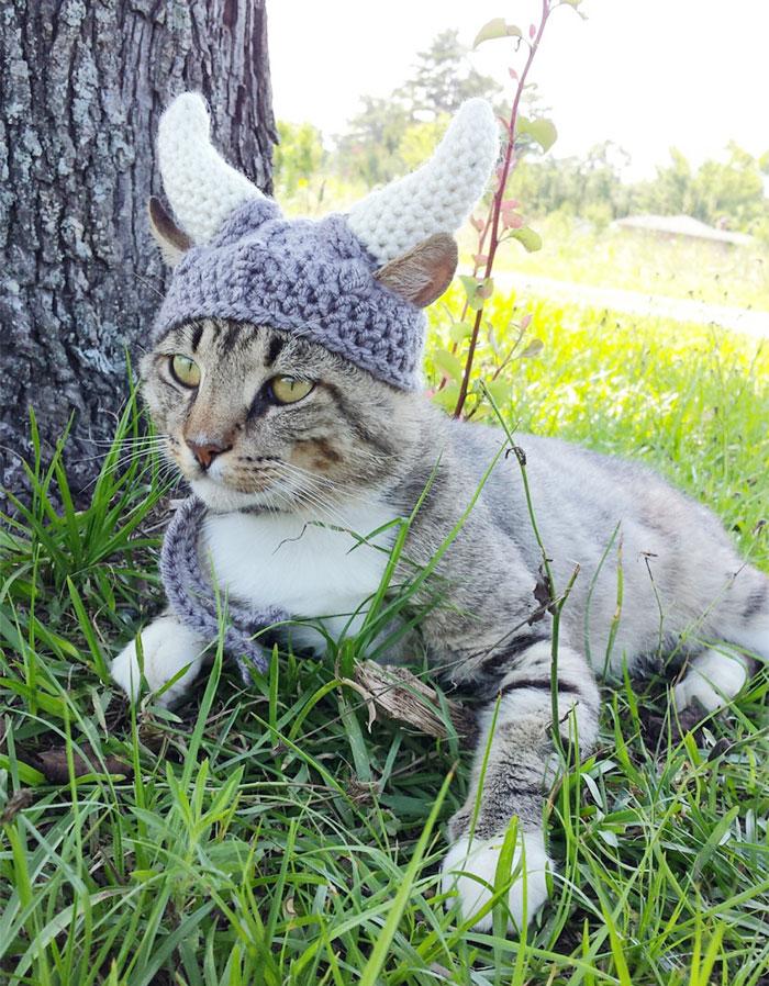 πλέκει καπέλα για κατοικίδια κατοικίδια καπέλα για κατοικίδια Καλλιτέχνιδα πλέκει καπέλα για κατοικίδια και είναι τέλεια!