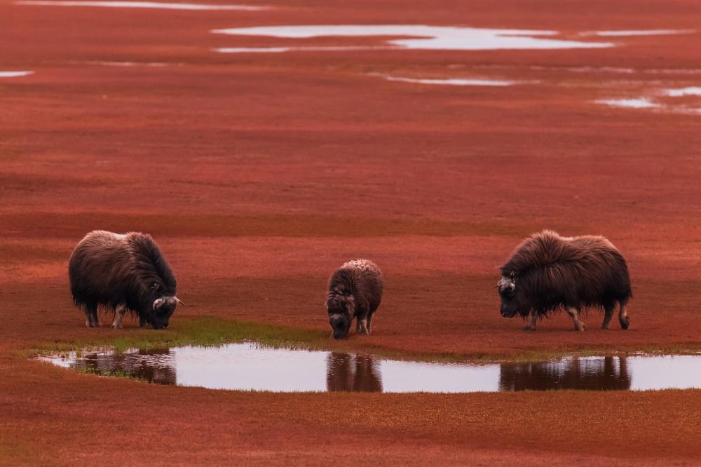 φωτογραφίες φωτογραφία φύση θαύματα της φύσης 16 καθηλωτικές φωτογραφίες από τα πιο εντυπωσιακά θαύματα της φύσης στον κόσμο μας