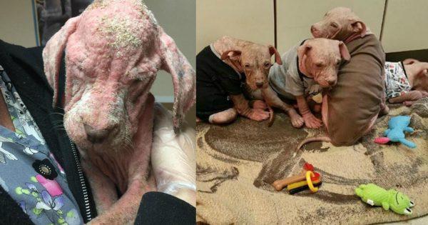Αυτά τα εγκαταλελειμμένα σκυλάκια πρόκειται να έχουν μία πολύ άσχημη μοίρα. Το πιο σοκαριστικό όμως είναι…