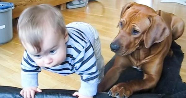 Το μωρό προσπαθεί να σκαρφαλώσει στο κρεβατάκι του σκύλου. Προσέξτε τώρα την αντίδρασή του… Θα λιώσετε!