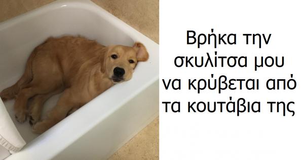 10 χιουμοριστικές εικόνες με αξιολάτρευτα σκυλιά, που σίγουρα θα σας σας κάνουν να χαμογελάσετε!