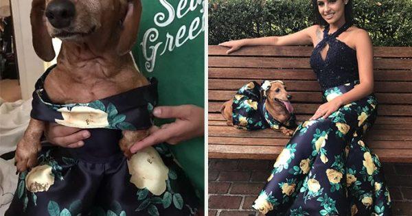 18χρονη φτιάχνει παρόμοιο φόρεμα με το δικό της για το dachshund της και κλέβει τις καρδιές όλων
