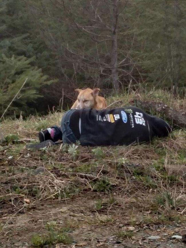 Σκύλος σκύλοι Αυτή η γυναίκα έσωσε έναν αδέσποτο σκύλο με τον πιο έξυπνο τρόπο αδέσποτο σκύλο