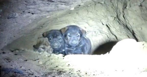 Προσπαθούσαν να σώσουν 8 εγκλωβισμένα κουταβάκια, αλλά μόλις κοίταξαν μέσα στην τρύπα; Έπαθαν ΣΟΚ!