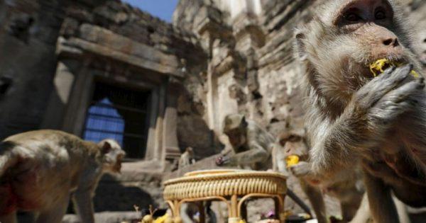 Αυτός ο ναός στην Ταϊλάνδη είναι γεμάτος μαϊμούδες!