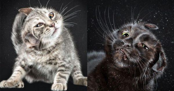 Αστεία πορτραίτα γατών την στιγμή που τινάζονται