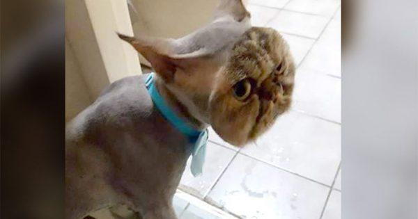 Γάτος πήγε σε κουρέα και τον κούρεψε με τον πιο περίεργο τρόπο
