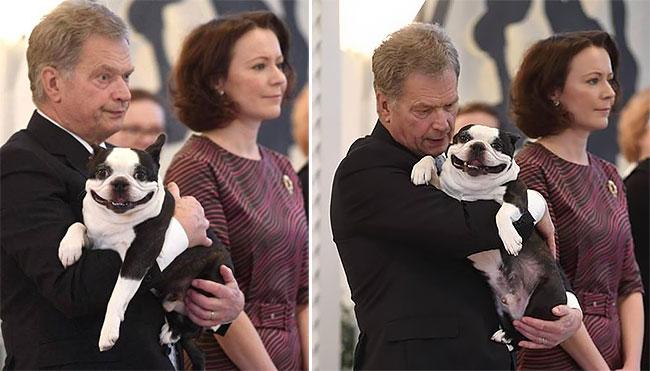 Σκύλος σκυλιά σκυλί Ο Lennu είναι το πιο αξιαγάπητο σκυλί της Φινλανδίας