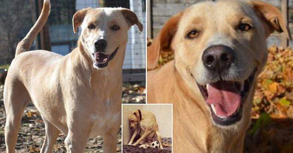 «Το πιο λυπημένο σκυλί στον κόσμο» που το παράτησαν ΞΑΝΑ για ευθανασία, βρίσκει επιτέλους οικογένεια να το υιοθετήσει