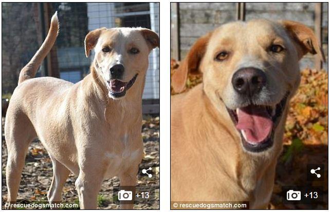 υιοθεσία αδέσποτων Σκύλος σκύλοι σκυλί
