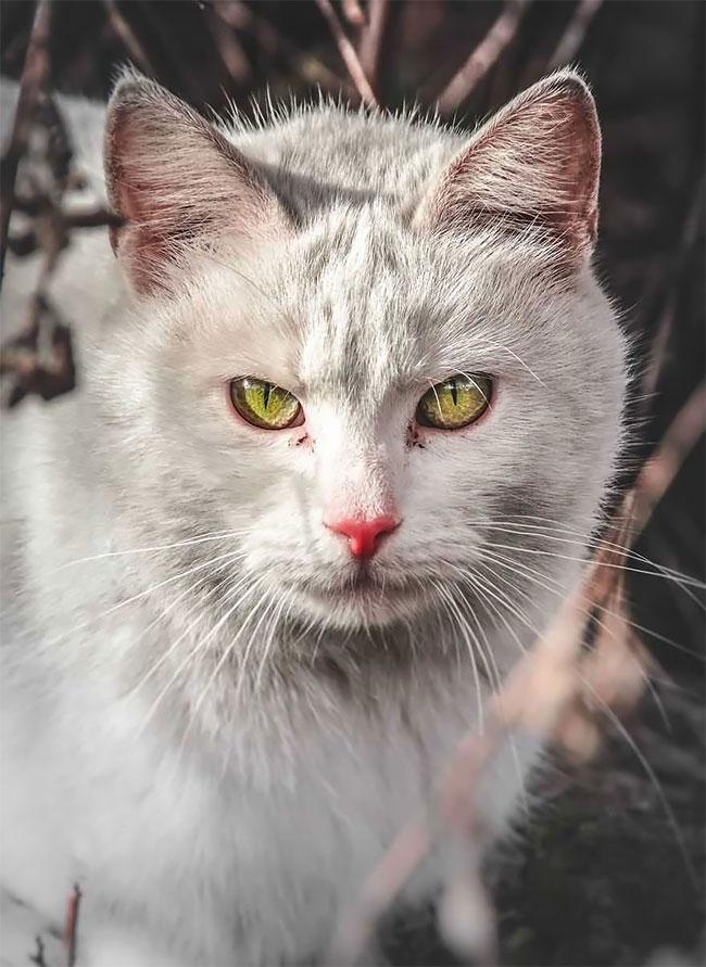 πορτραίτα αδέσποτων γατών Ο Gabriel Khiterer τραβάει μαγευτικά πορτραίτα των αδέσποτων γατών της Λιθουανίας γάτες Γάτα αδέσποτη γάτα αδέσποτες γάτες