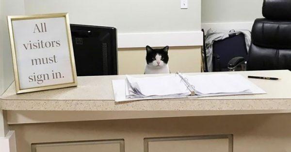 Γνωρίστε την Oreo, την πρώτη γάτα-νοσοκόμα του κόσμου