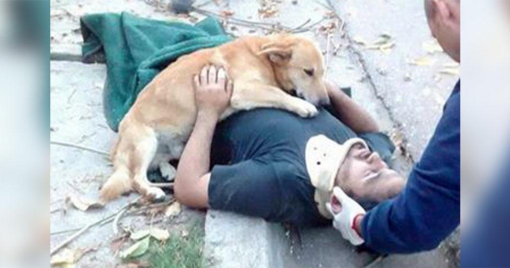 Σκύλος δεν αφήνει από την αγκαλιά του τον ιδιοκτήτη του που τραυματίστηκε από πτώση Σκύλος σκύλοι