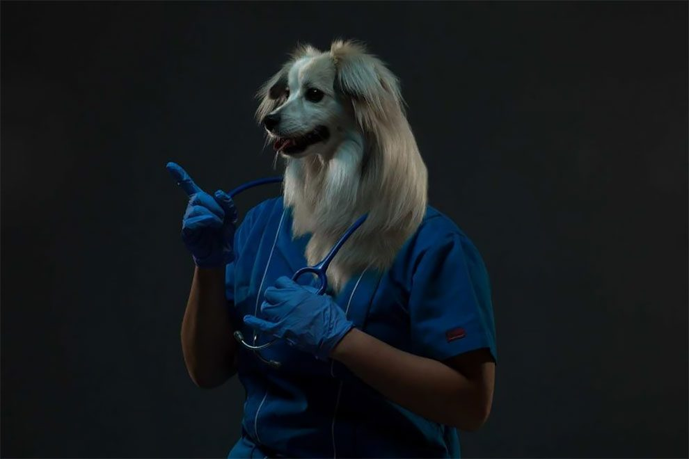 σκύλοι ιδιοκτήτες
